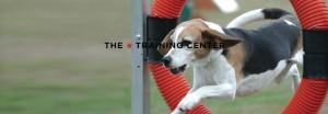 Pet Training