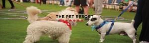 The Pet Resort