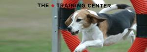 the training center