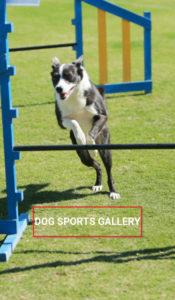 dog-sports-gallery