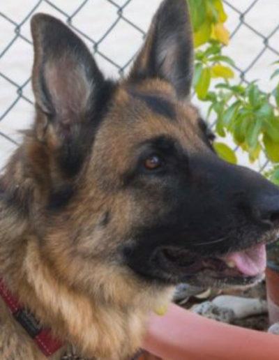 jebel-k9-dog-training (23)