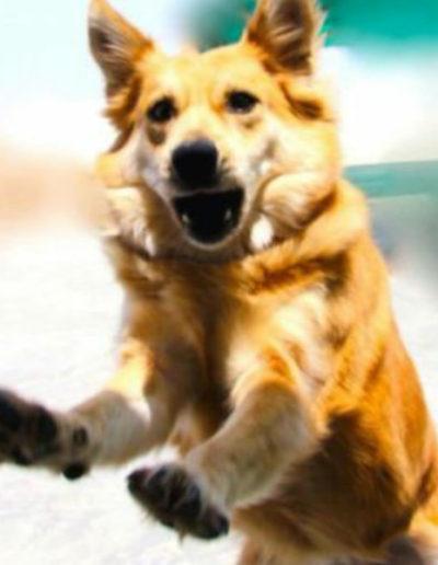 jebel-k9-dog-training (26)