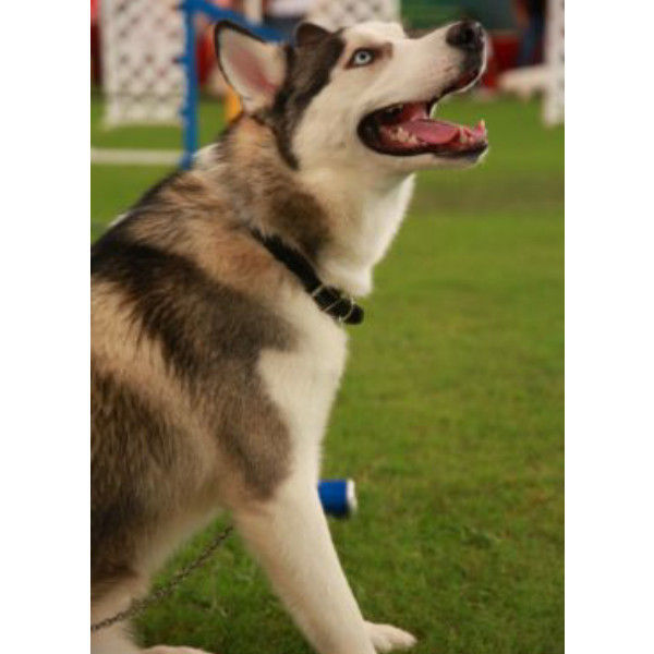 K Dog Training Services