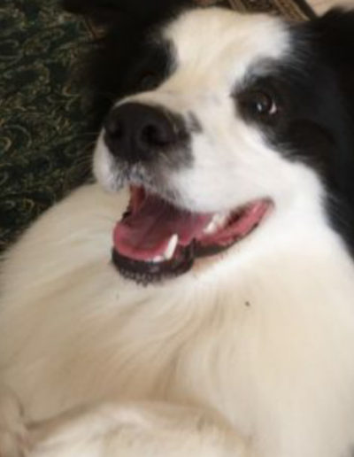 jebel-k9-dog-training (31)
