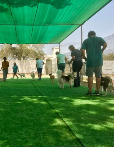 jebel-k9-dog-training