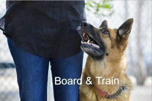 Board Train