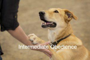 Intermediate Obedience