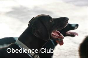 Obedience-club