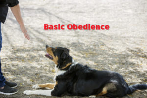 basic-obedience