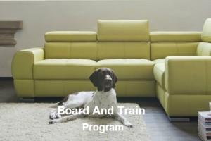 board and train program