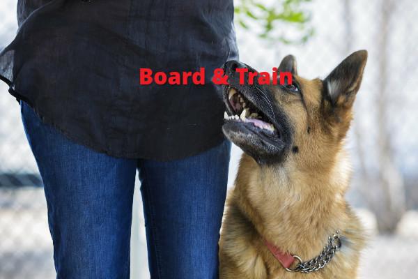 Dog Boarding Muscat Oman