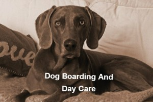 dog boarding & day care