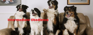 intermediate-obedience