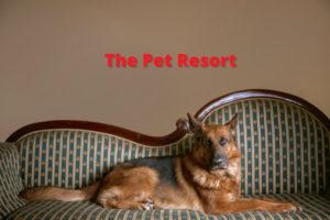 the-pet-resort