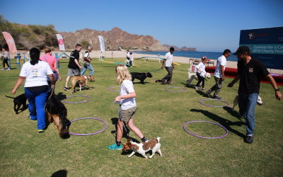Canines For A Cause (Videos)