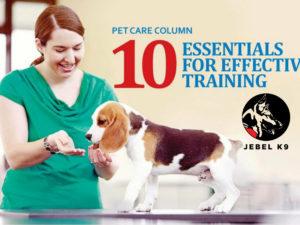 10-essentials-for-effective-training-1