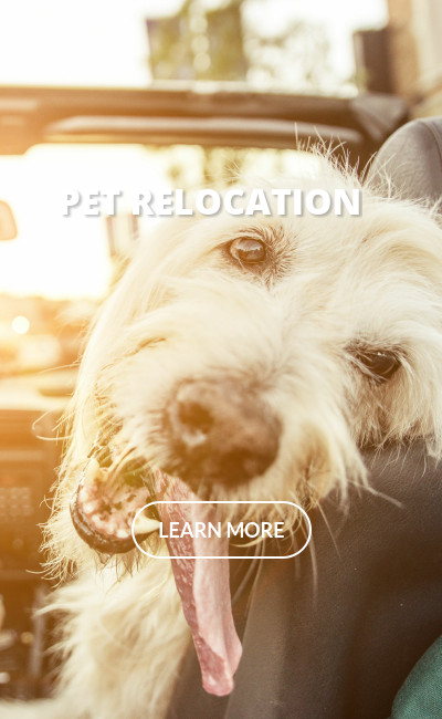 Pet Relocation Services by Jebel K9 Dog Services