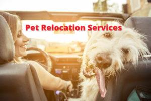 Pet-relocation-services