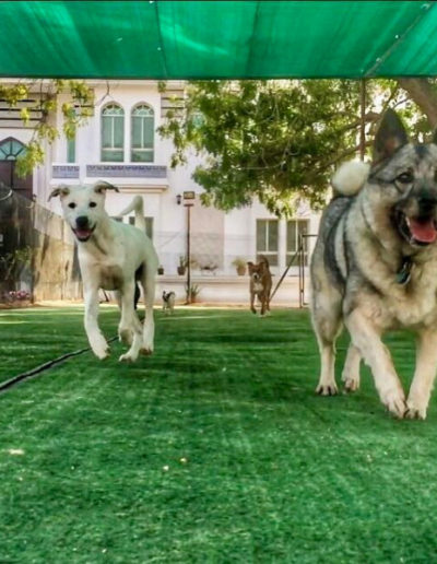 jebel-k9-dog-boarding