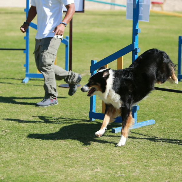 photo gallery from our dogs having dog sports by jebel k9