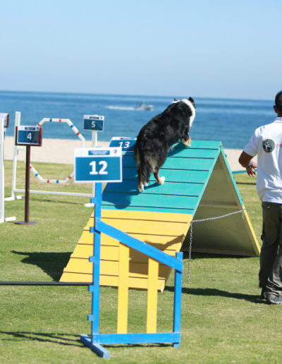 jebel-k9-dog-sports