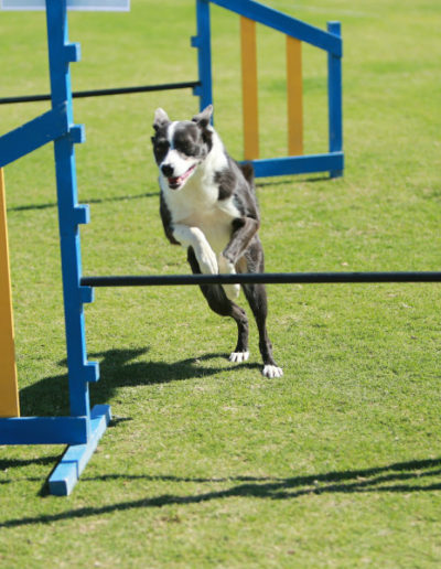 jebel-k9-dog-sports-agility