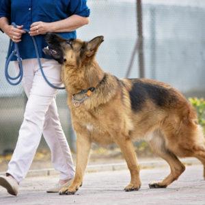 jebel-k9-dog-training