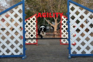 agility-front