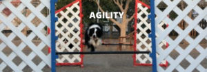 agility-jebel-k9 (4)