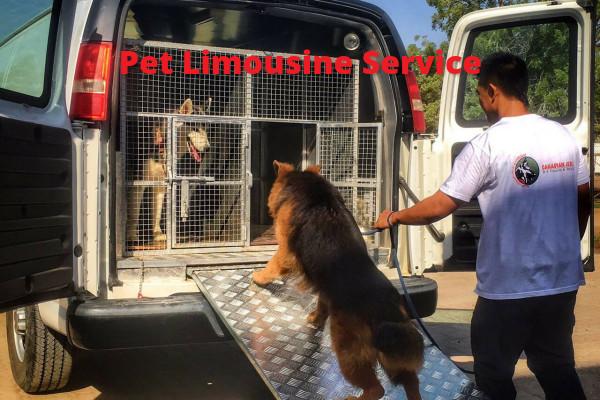 Pet Limousine Service